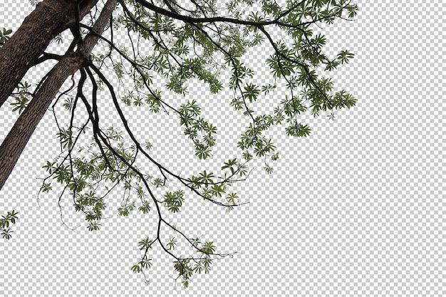 Folhas de árvores tropicais e primeiro plano de galhos isolados