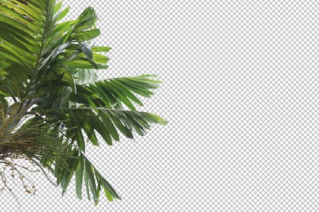 Folhas de árvores tropicais e primeiro plano de galhos