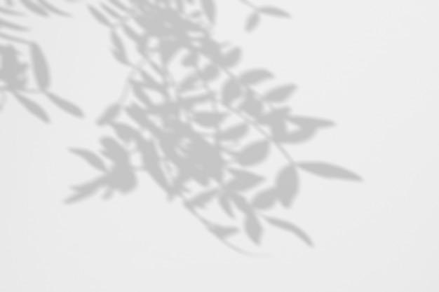 Fundo de verão da árvore tropical de sombras em uma parede branca
