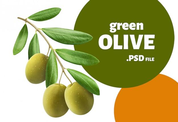 Galho de árvore de azeitonas verdes isolado, design para embalagens
