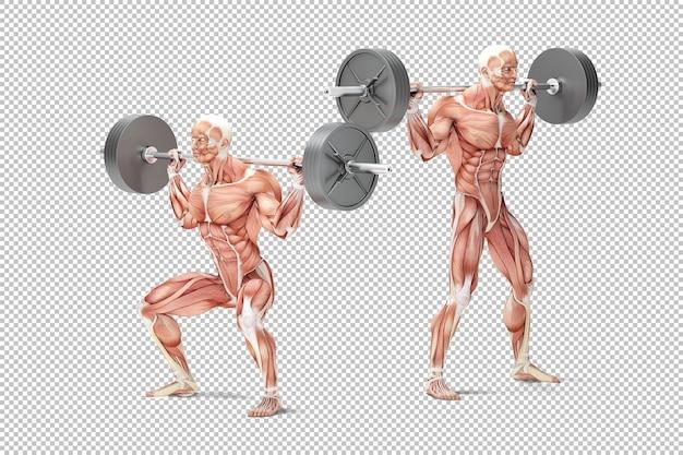 Ilustração anatômica do exercício de agachamento com barra