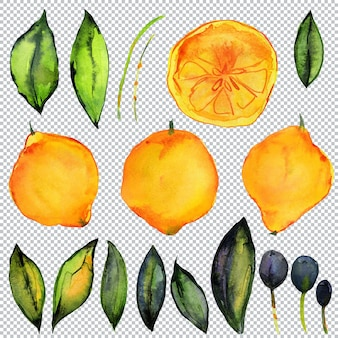 Limão e olive garden. elementos em aquarela de plantas cítricas e oliveiras. frutas, folhas e galhos