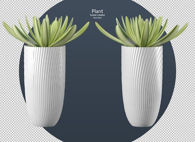 Lindos vários tipos de plantas em vaso isolado com trajeto de grampeamento