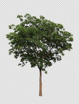 Melhor coleção de árvore de frutos