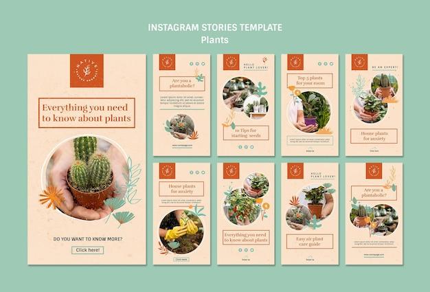 Modelo de histórias do instagram de plantas