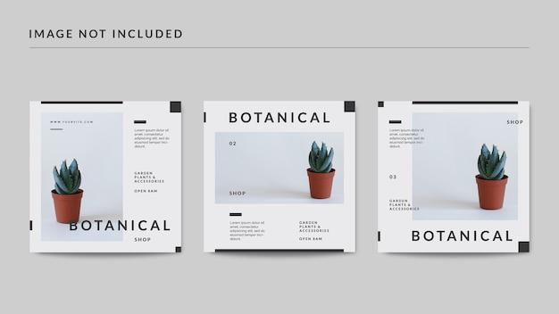 Modelo de postagem em mídia social botânica