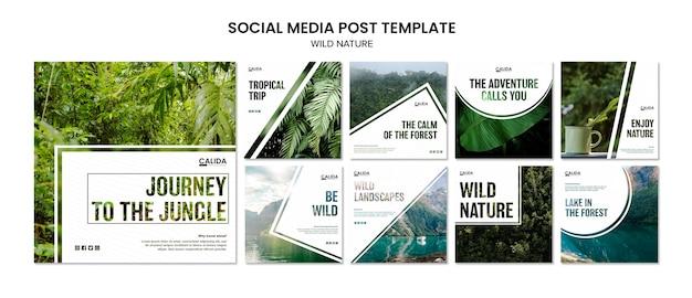 Modelo de postagens de mídia social da natureza selvagem