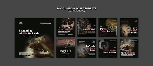 Modelo de postagens de mídia social do dia mundial da vida selvagem