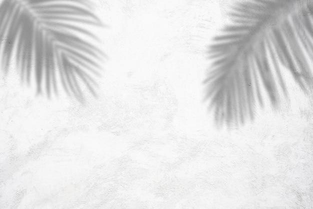 Natureza fundo de verão de sombras folhas de palmeira na parede de concreto