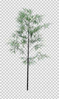 Natureza objeto bambu árvore isolado branco