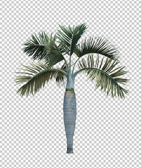 Natureza objeto palmeira isolado branco