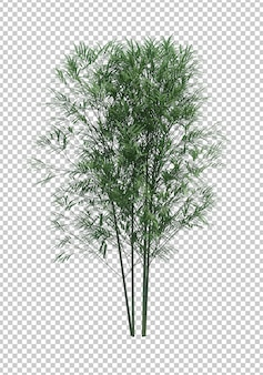 Objeto da natureza. árvore de bambu isolada