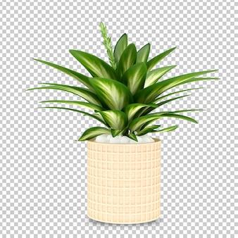 Planta em vaso em 3d renderizado isolado