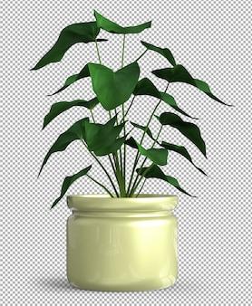 Planta isolada em vaso