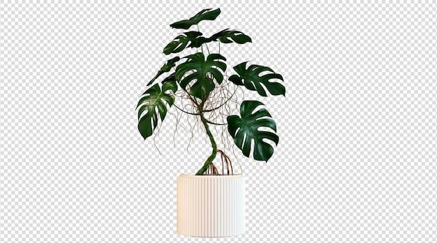 Plantas de folha larga e em vaso branco