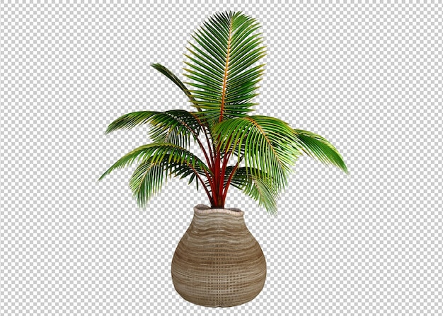 Plantas em vasos de madeira