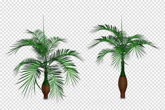 Plantas isométricas em renderização 3d