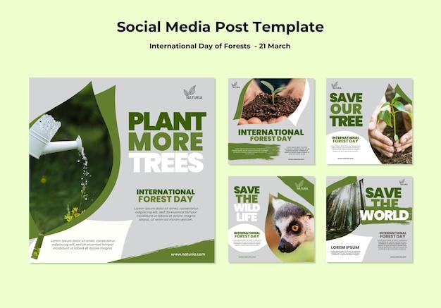 Postagem de mídia social do dia internacional da floresta