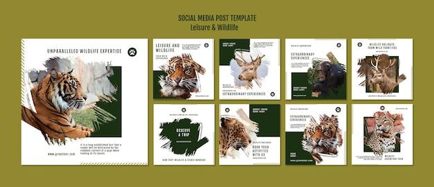 Postagens de mídia social de lazer e vida selvagem