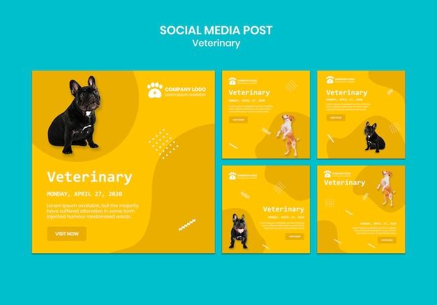 Postagens de mídia social veterinária