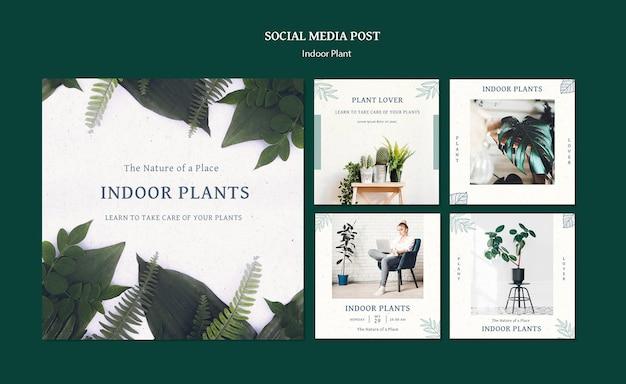 Postagens nas redes sociais de plantas de interior