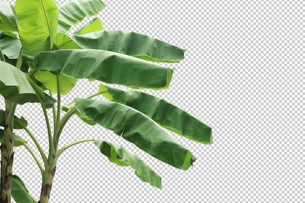 Primeiro plano de bananeira realista isolado
