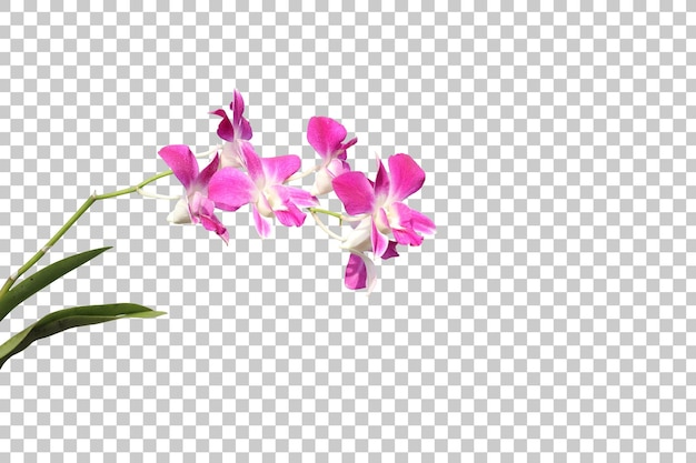 Primeiro plano de plantas com flores realistas isolado
