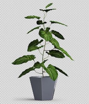 Renda da planta isolada. vista frontal isométrica. 3d.