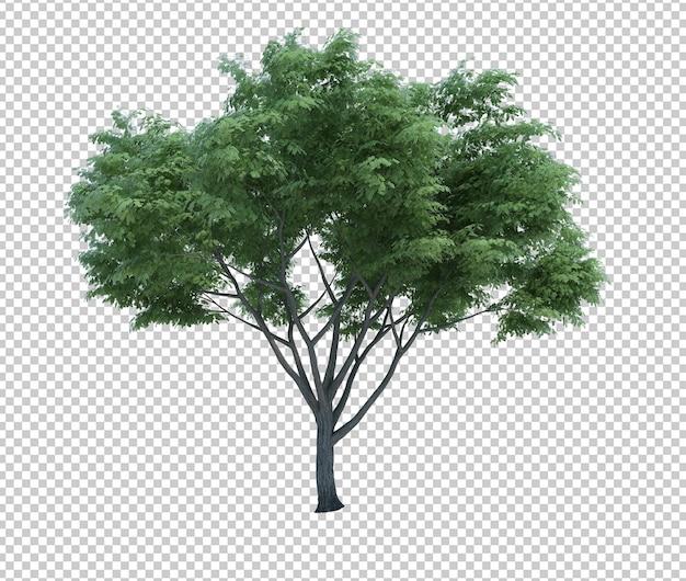 Renderização 3d árvore de objetos de natureza isolada