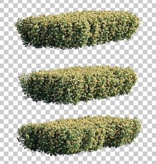 Renderização 3d de arbustos euphorbia milii