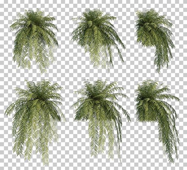 Renderização 3d de árvore de samambaia