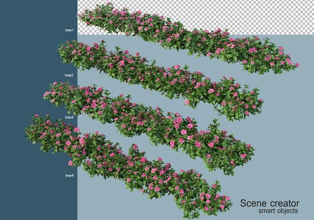 Renderização 3d de belas plantas em vários ângulos isolados