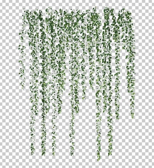 Renderização 3d de epipremnum aureum