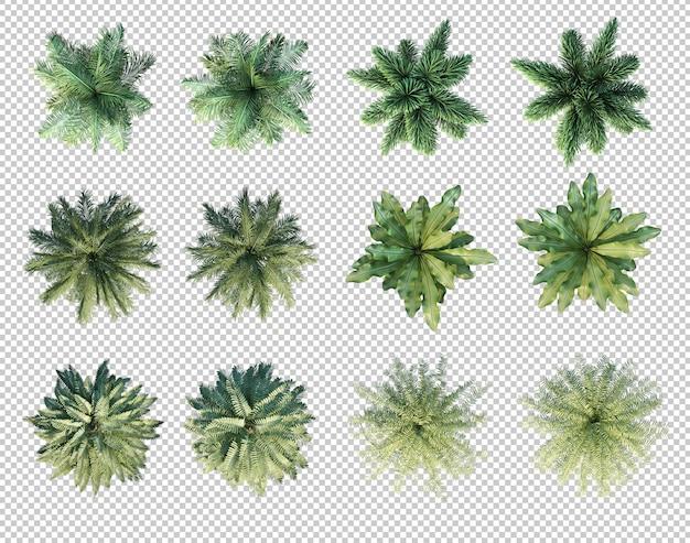 Renderização 3d de palmeiras em vista superior