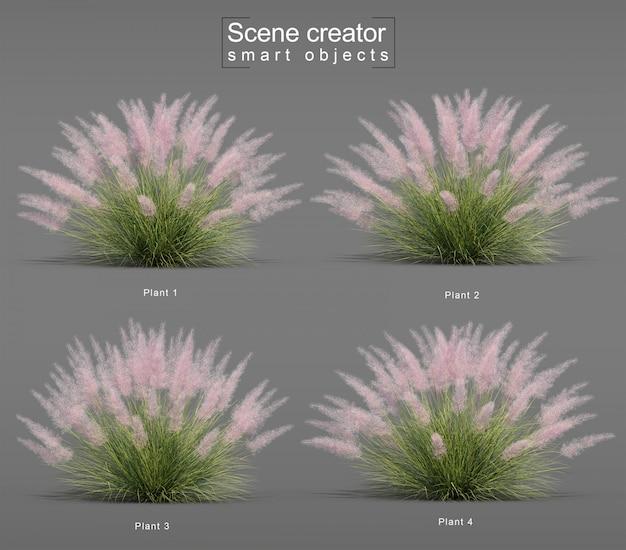 Renderização 3d de pink flamingo muhly grass