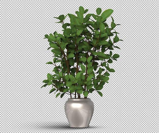 Renderização 3d de plantas realistas isoladas em um vaso