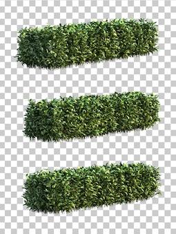 Renderização 3d de pseuderanthemum atropurpureum