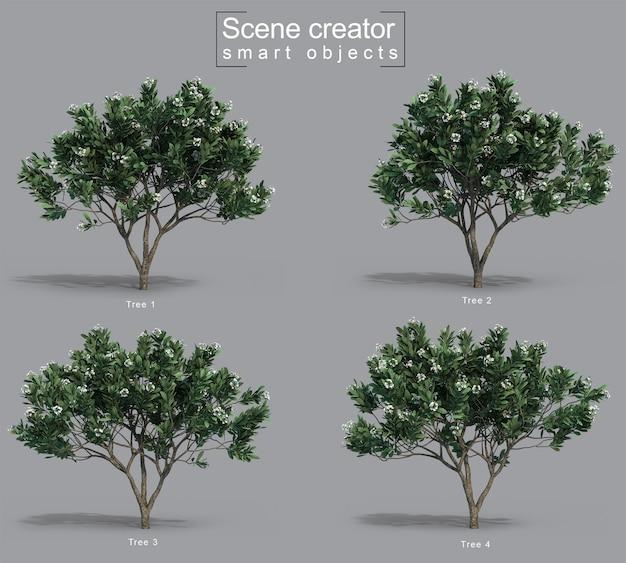 Renderização 3d do criador da cena da árvore frangipani