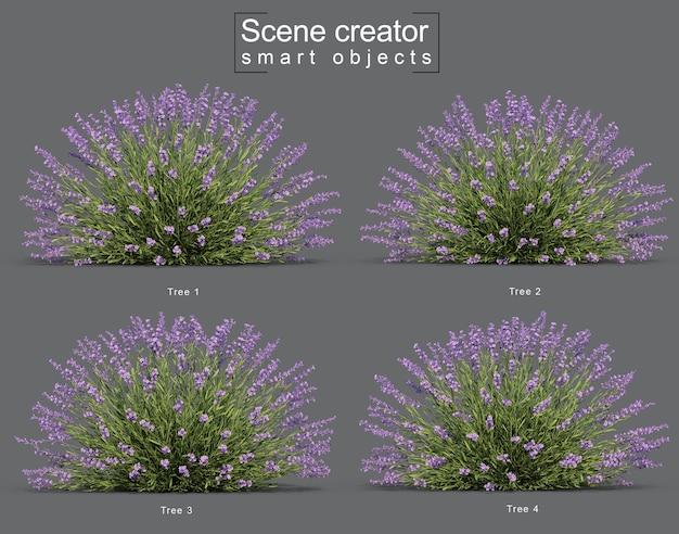 Renderização 3d do criador de cena de árvore de lavanda
