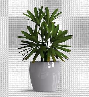 Renderização 3d realista de planta isolada