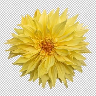 Renderização isolada de flor dália amarela