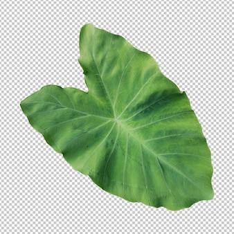 Renderização isolada de folha de colocasia verde