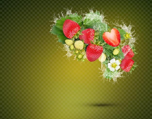 Respingos de água em morangos frescos com folhas isoladas em fundo verde premium psd
