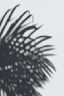 Sombra de folhas de palmeira em uma parede branca