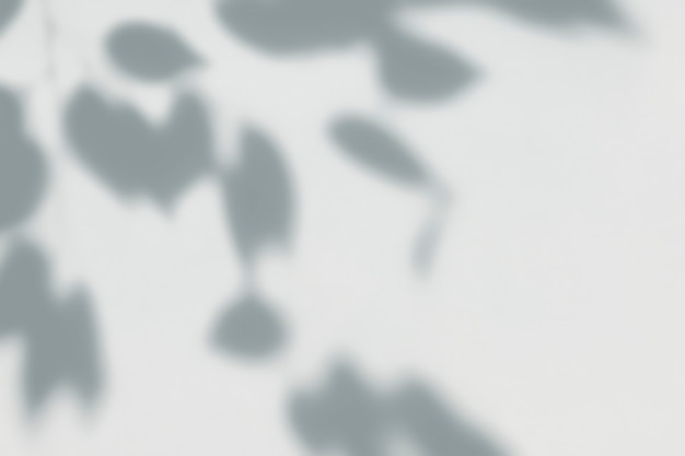 Sombra de folhas em uma parede