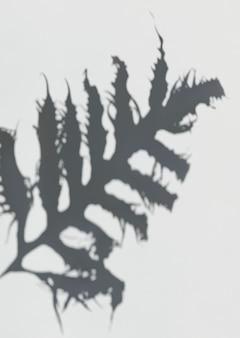 Sombra de uma folha de leatherfern em uma parede branca