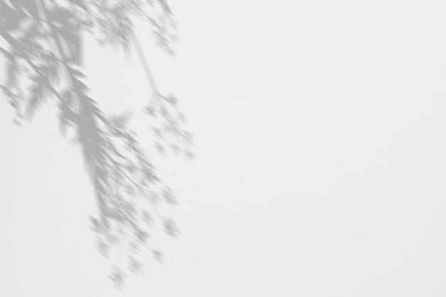 Sombras ervas selvagens e flores em uma parede branca