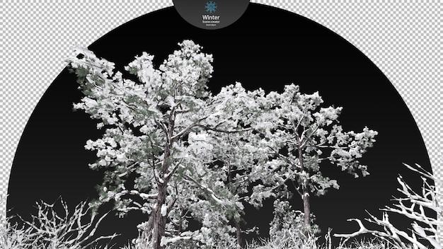 Várias árvores de inverno cercando o caminho de recorte de riacho