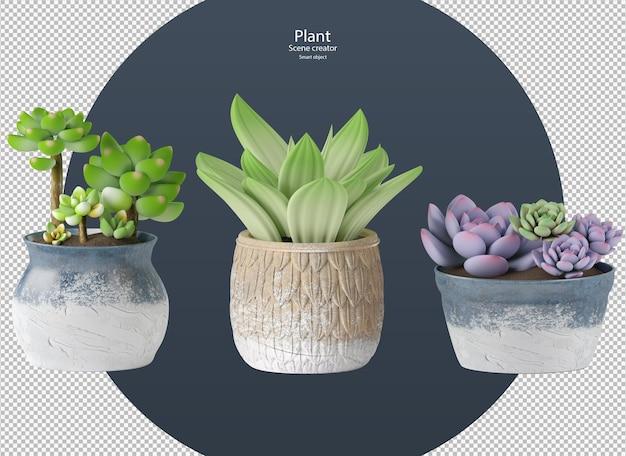 Várias cores bonitas de echeveria planta isolada trajeto de grampeamento