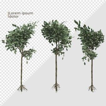 Vários ângulos de decoração de plantas de árvore